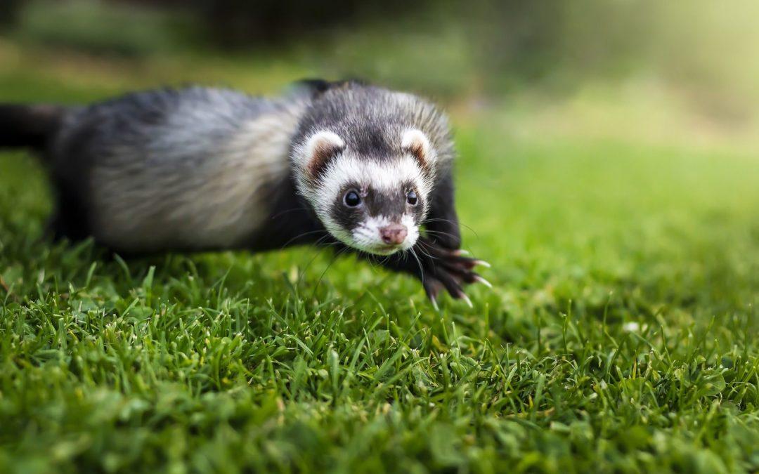 Koliko životinjskih krzna košta jedan mobitel?